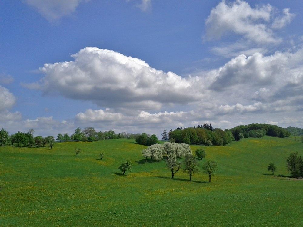 Obstblüte und Cumuli