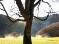 Dampfende Wiesen