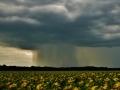 Niederschlagsfuß