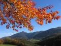 Bunte Kirschbaumblätter mit Hocheck
