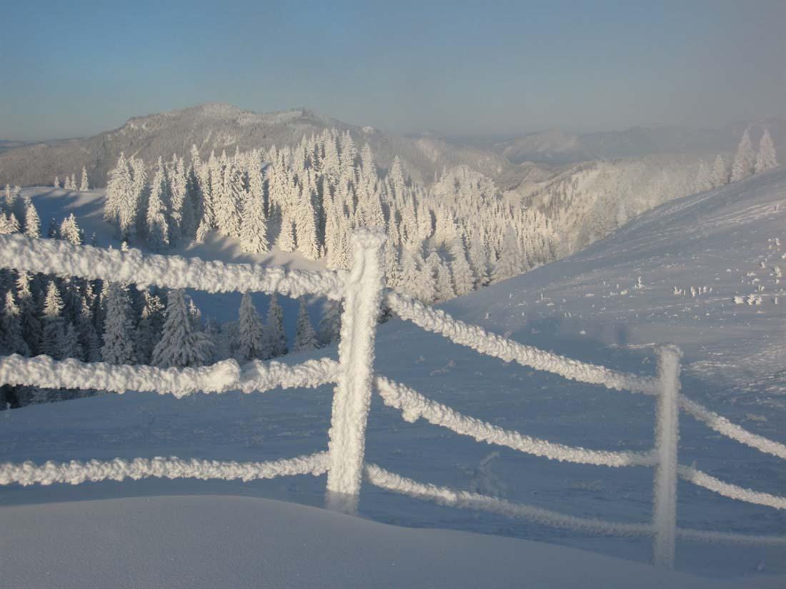 Tiefverschneiter Fichtenwald