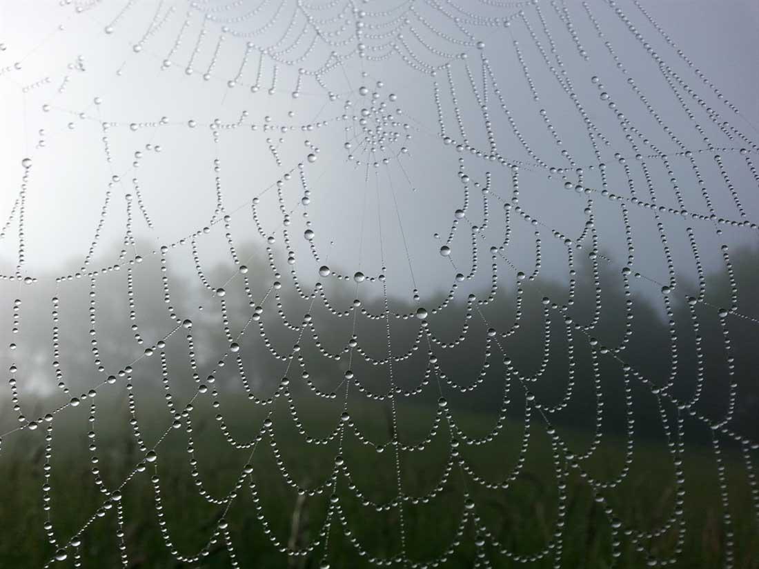 Tautropfen auf Spinnfäden
