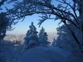 verschneiter Fichtenwald