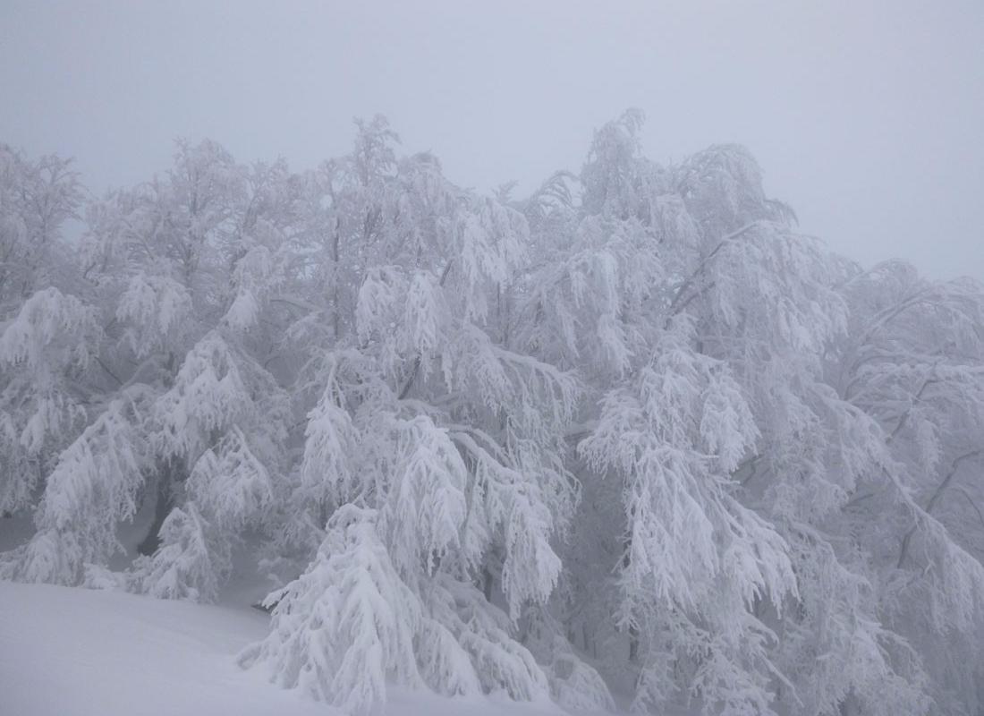 01.2013.hochstaff-reislpe.2-2