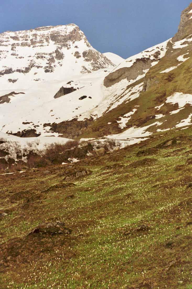 05.2001.gr.bärenkopf.3-2